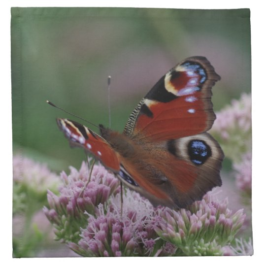 Peacock Butterfly Cloth Napkins