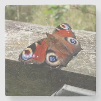 Peacock Butterfly Coaster