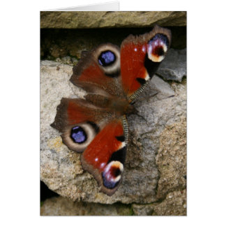 Peacock Butterfly, England Card