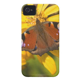 Peacock butterfly iPhone 4 Case-Mate cases