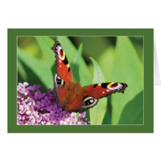 Peacock Butterfly on Buddleia Blank Card