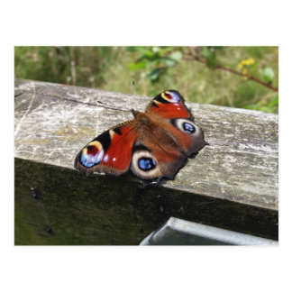 Peacock Butterfly Postcard