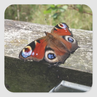 Peacock Butterfly Square Sticker