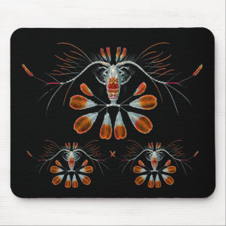 Peacock Calanid Mouse Pad