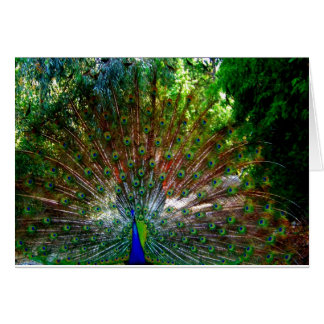 Peacock_ Card_by Elenne Boothe Greeting Card