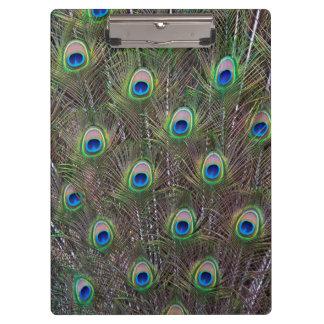 Peacock Clipboard