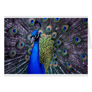 Peacock Close Up Greeting Cards