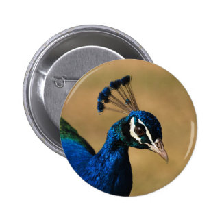 Peacock customizable badges & buttons