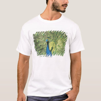Peacock displaying T-Shirt