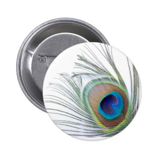 Peacock Feather 2 Inch Round Button