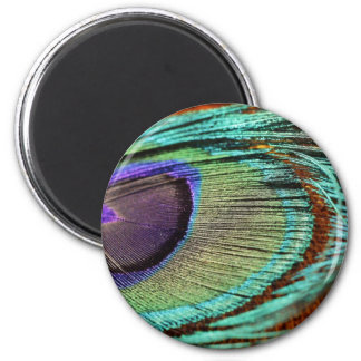 Peacock feather against flower 2 inch round magnet