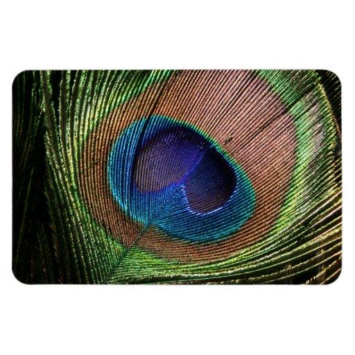 Peacock feather beautiful blue photo fridge magnet
