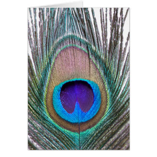 Peacock Feather Card