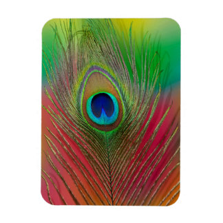 Peacock feather close-up magnet