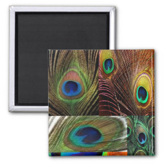 peacock feather collage square magnet