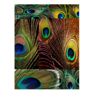 peacock feather collage postcard