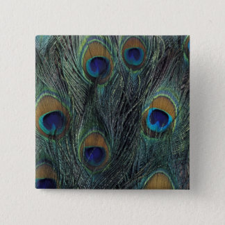 Peacock feather design 2 inch square button