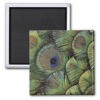 Peacock feather design 2 refrigerator magnet