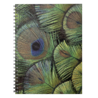 Peacock feather design 2 notebook