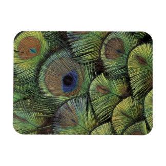 Peacock feather design 2 rectangular photo magnet
