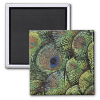 Peacock feather design 2 square magnet
