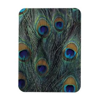 Peacock feather design rectangular photo magnet