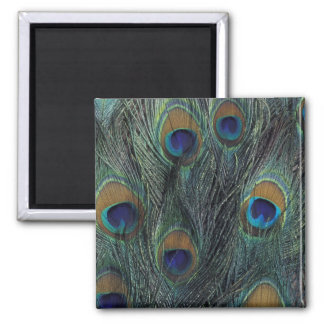 Peacock feather design square magnet