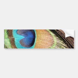 Peacock Feather Designs Bumper Sticker