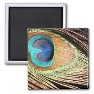 Peacock Feather Designs Square Magnet Fridge Magnets