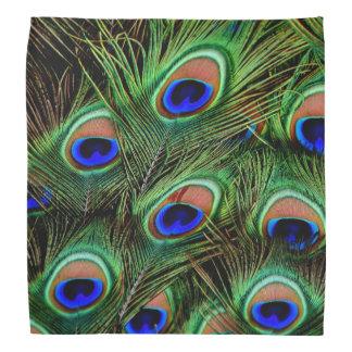 Peacock Feather Display Bandana
