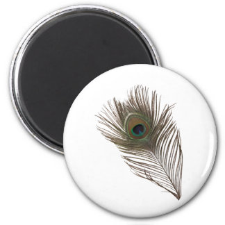 Peacock feather fridge magnets