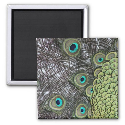 Peacock Feather Magnet Refrigerator Magnets