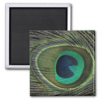Peacock Feather Refrigerator Magnet