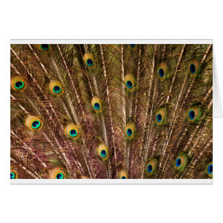 Peacock Feather Pattern Card