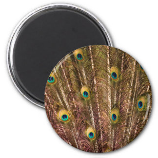 Peacock Feather Pattern Magnet