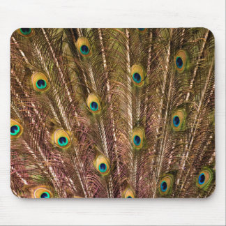 Peacock Feather Pattern Mouse Pad