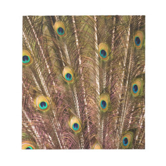 Peacock Feather Pattern Notepad