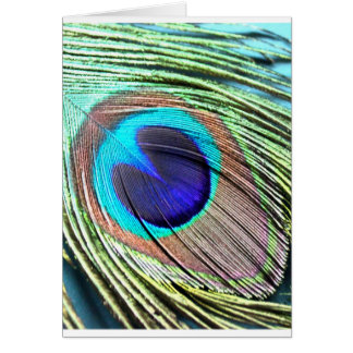 Peacock Feather Product Card