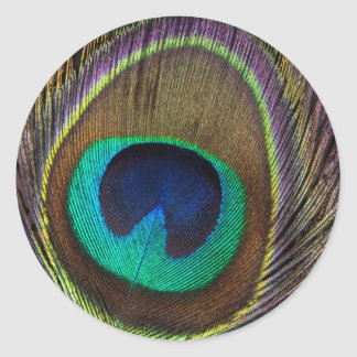 Peacock Feather Upright Close-Up Round Sticker