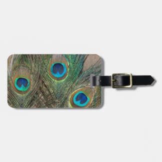 Peacock Feather with Rocks Luggage Tag