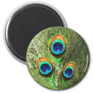 Peacock Feathers Bird 2 Inch Round Magnet
