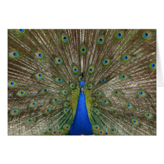 Peacock Feathers Blank Greeting Card