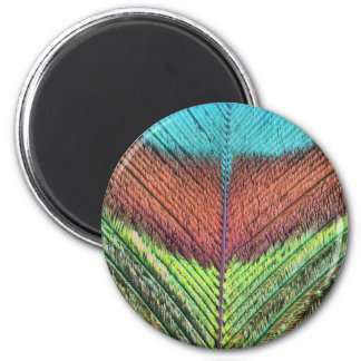 Peacock feather's close up 2 inch round magnet