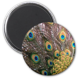 Peacock Feathers Emerald Green and Gold 2 Inch Round Magnet