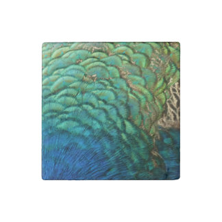 Peacock Feathers I Colorful Abstract Nature Design Stone Magnets