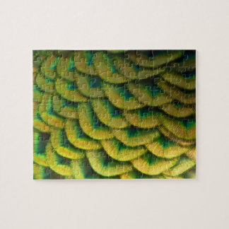Peacock Feathers II Colorful Nature Design Jigsaw Puzzle