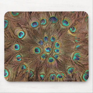 Peacock feathers mouse pad
