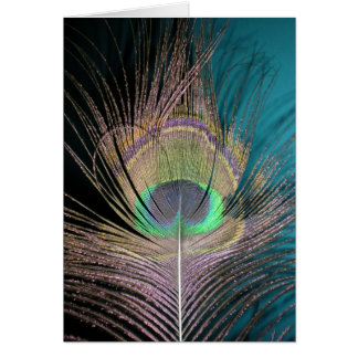 Peacock Feathers on black and turquoise Card