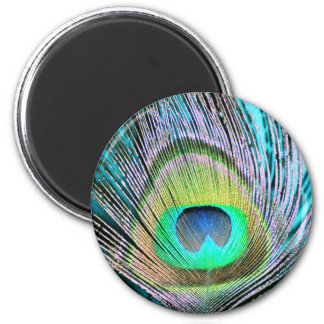 Peacock Feathers on turquoise 2 Inch Round Magnet