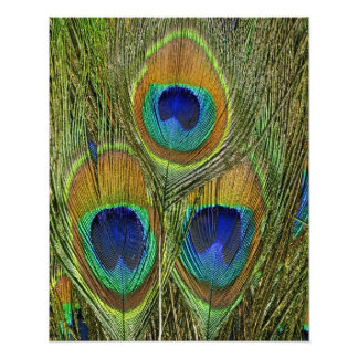 Peacock Feathers Art Photo